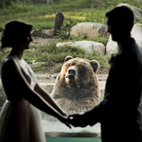 медведя не впечатлила свадьба