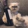 кошка расслабляется с вином