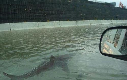 поддельная фотография с акулой