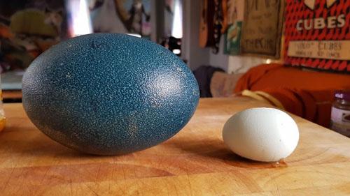 яйца заказали через интернет
