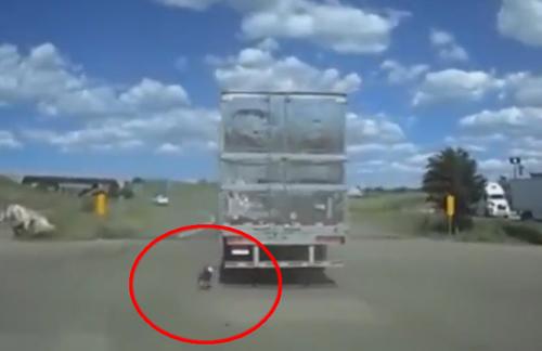 собаку привязали к грузовику