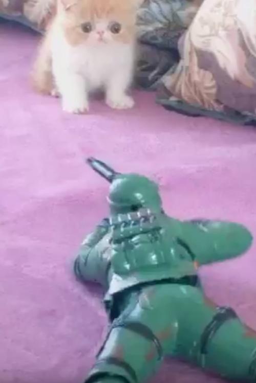 солдатик напугал котёнка