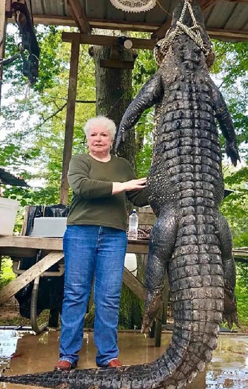 бабушка застрелила аллигатора