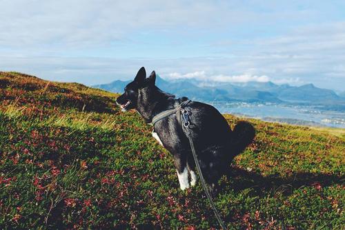 живописный календарь с собаками