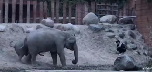 близкое знакомство со слонами