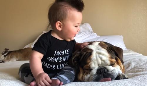 приставучий малыш и сонный пёс