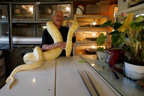 любитель змей и рептилий