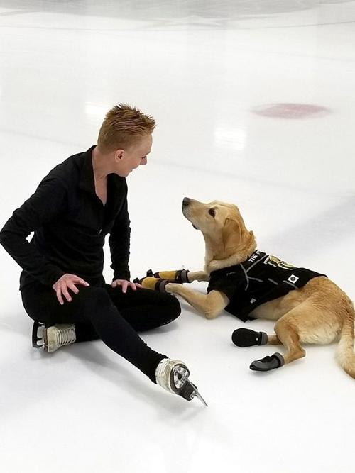 пёс любит кататься на коньках