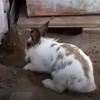 кролик помог кошке
