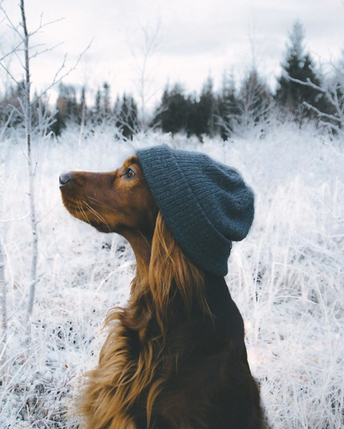 хозяин и собака ходят в походы