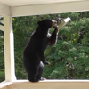 дружба с медвежьим семейством