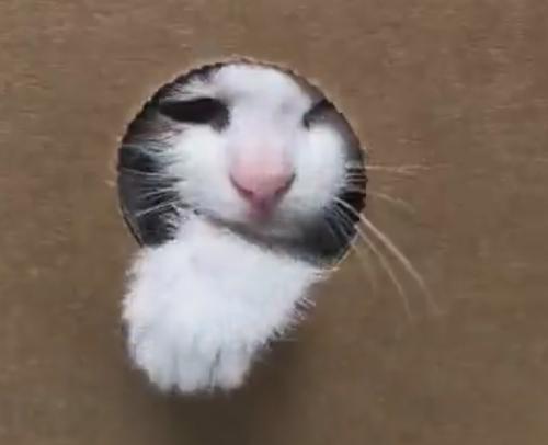 приютский котёнок в коробке