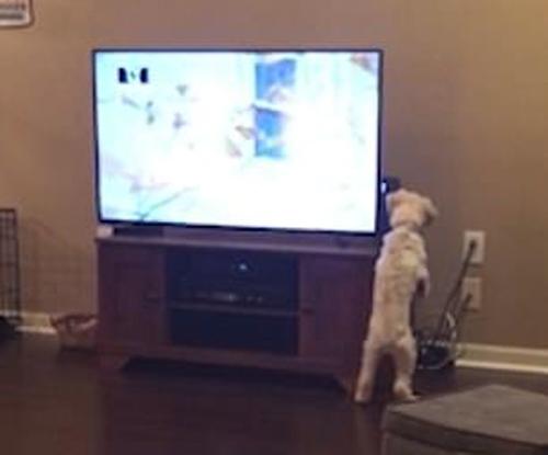 пёс смотрит детективное телешоу