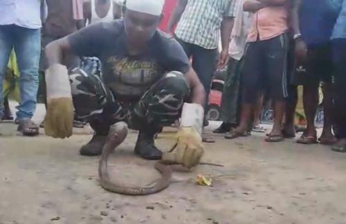 змея застряла в ящике