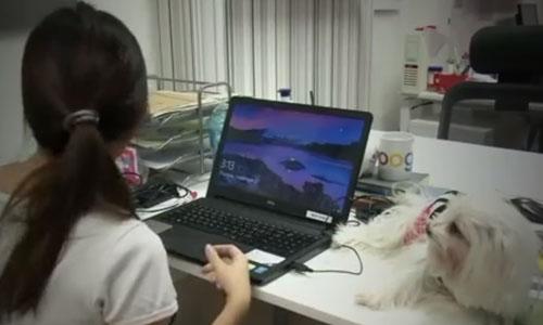 люди ходят на работу с собаками