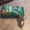 щенок атаковал мешок с кормом