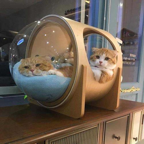 новые кровати для кошек