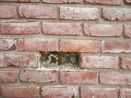 улей в стене жилого дома