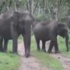 туристы встретились со слонами
