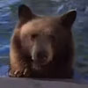 медвежья семейка в бассейне