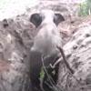 невезучий слон в колодце