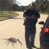 нападение гигантского паука