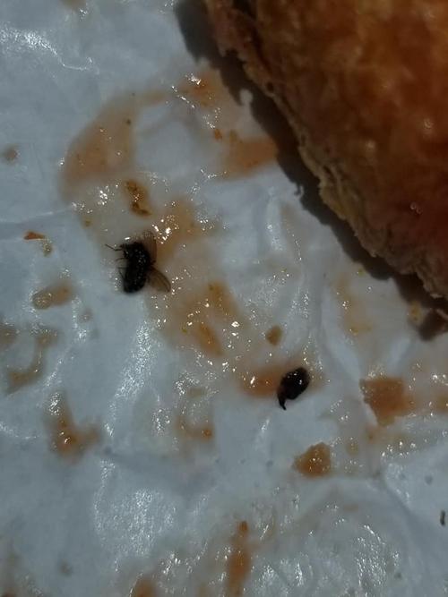 насекомые и личинки в сэндвиче