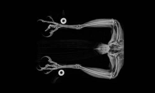 жуткие снимки животных