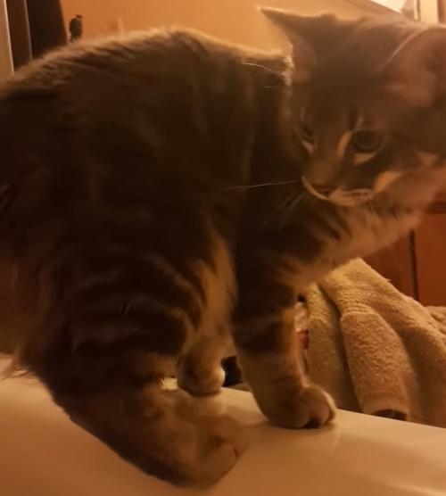 мокрый хвост у котёнка