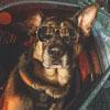 календарь с полицейскими собаками