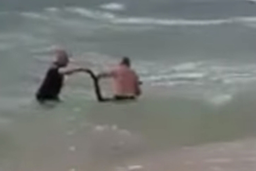 кенгуру не справился с волнами