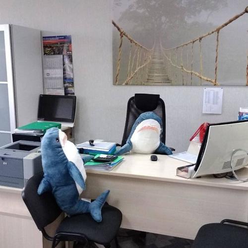 фотографии плюшевых акул