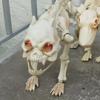 бульдог и игрушечные скелеты