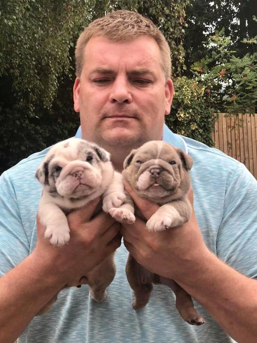 грабители отобрали щенков