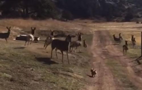 собачка и стадо оленей