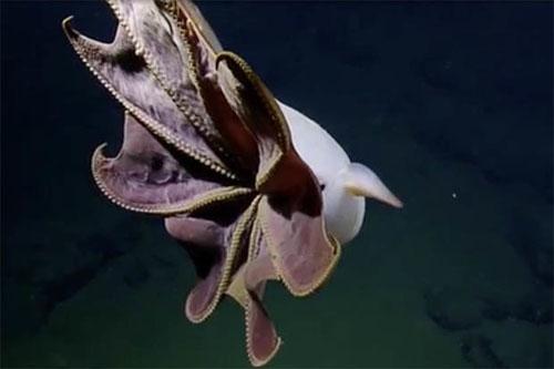 осьминог похож на привидение