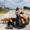 помощь бездомным собакам