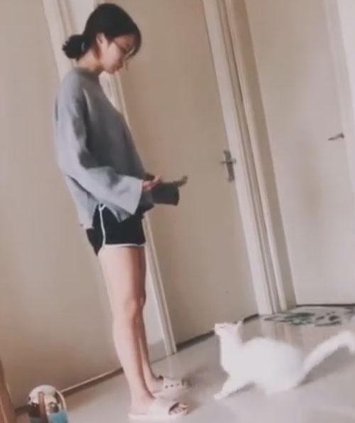 кошка прыгает в объятия
