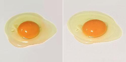 реалистично нарисованное яйцо
