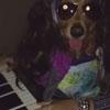 пёс играет на фортепиано
