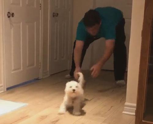 забавная игра хозяина и щенка
