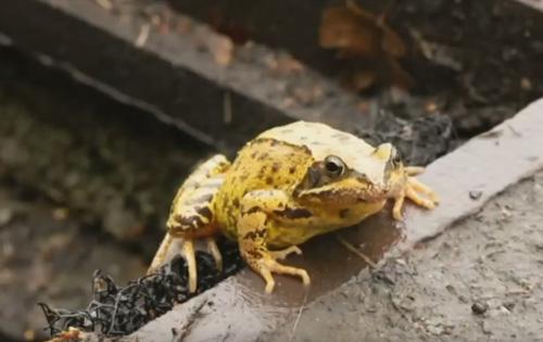 лесенки для спасения лягушек