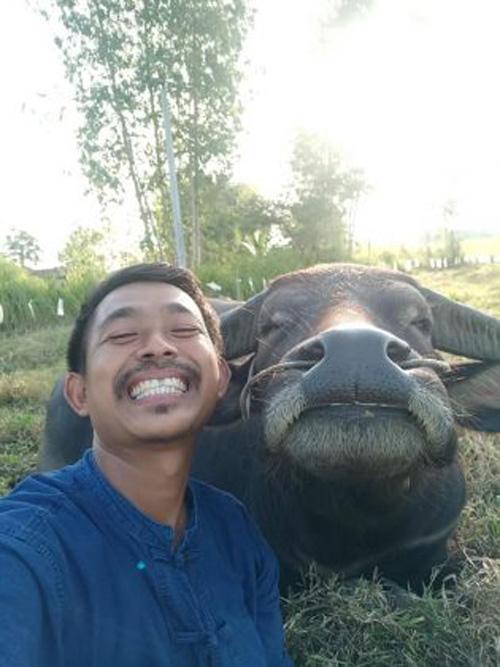 дружба с улыбчивым буйволом