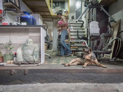 собаки живут в автомастерских