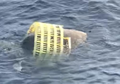 черепаха в пластиковой корзине