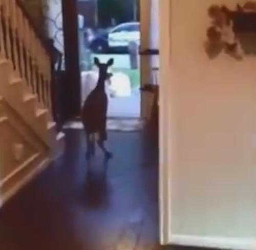 олень ворвался в дом через окно