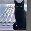 кошки хотят попасть в музей