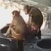 обезьяны искупались в воде