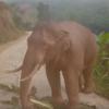 голодный слон в гостинице