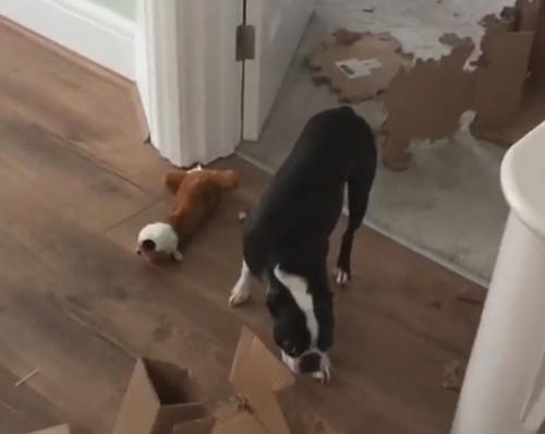 пёс застыл от стыда